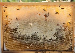 Ramme med forsegla honning